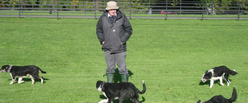 sheepdog trial training